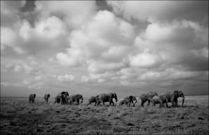 Vanessa - Parc d'Amboseli (Kenya)