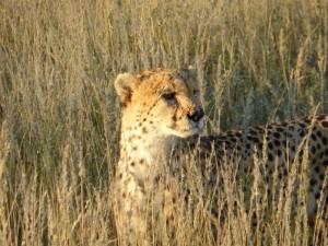 Emmanuel - Kalahari (Namibie)