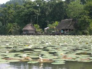 Youri - Guatemala
