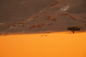 Nicoletta - Dunes (Namibie)